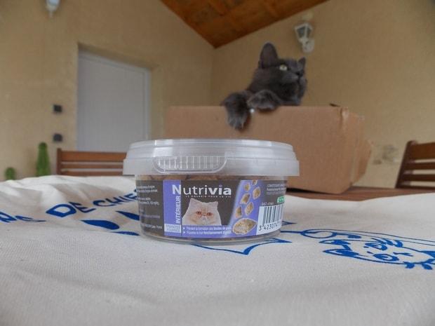 kittybox0