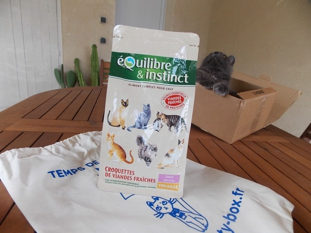 kittybox1