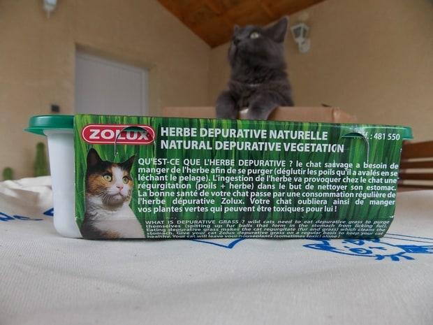 kittybox4