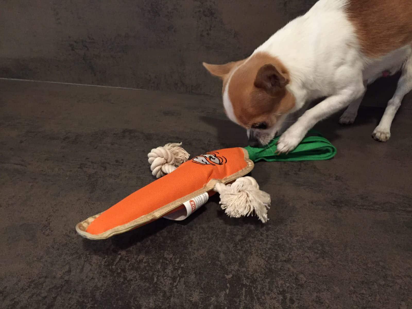 doggybox-sep2014-6