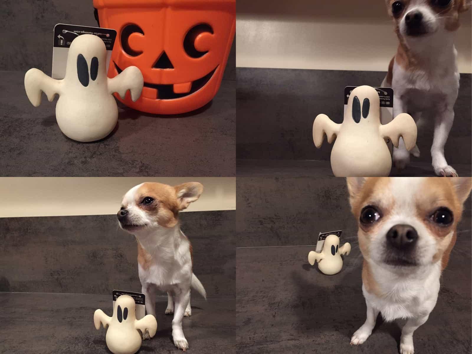 doggybox-octobre2014-3