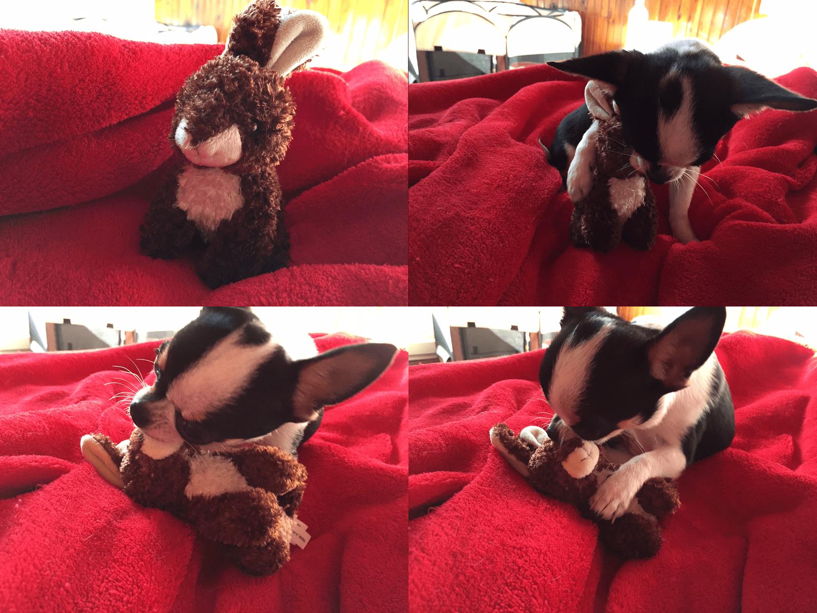 doggybox-novembre2014