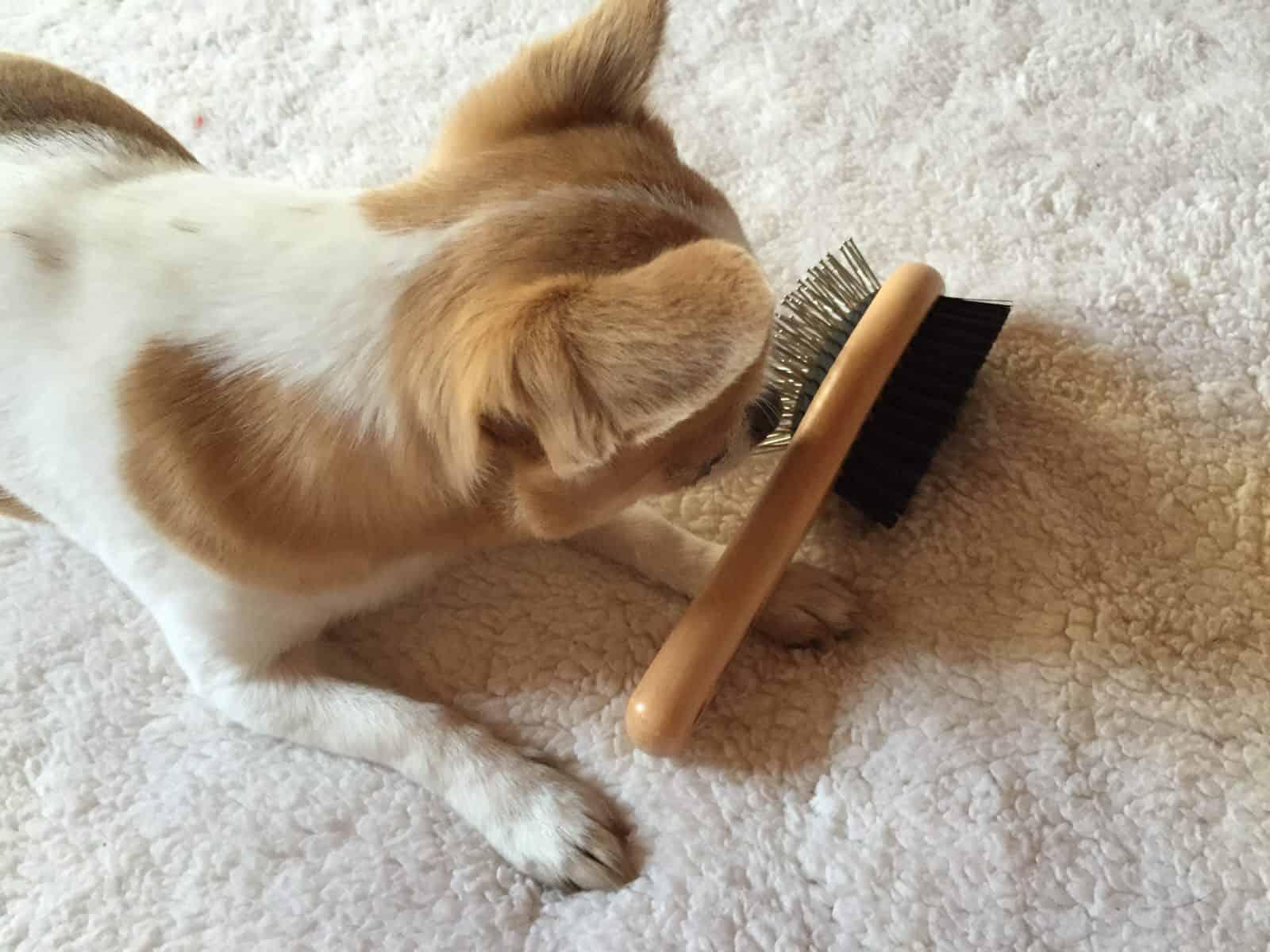 doggybox-juin2015
