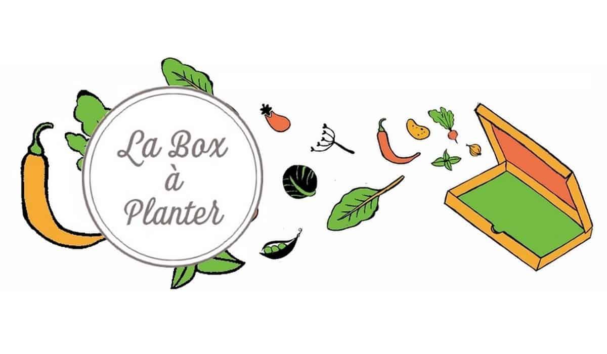 toutes les box la box planter faites pousser vos propres l gumes. Black Bedroom Furniture Sets. Home Design Ideas
