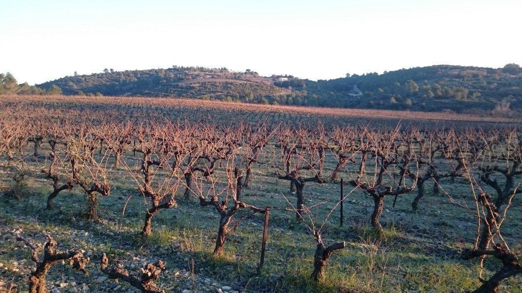 trouve-ton-vigneron-novembre-2016-6