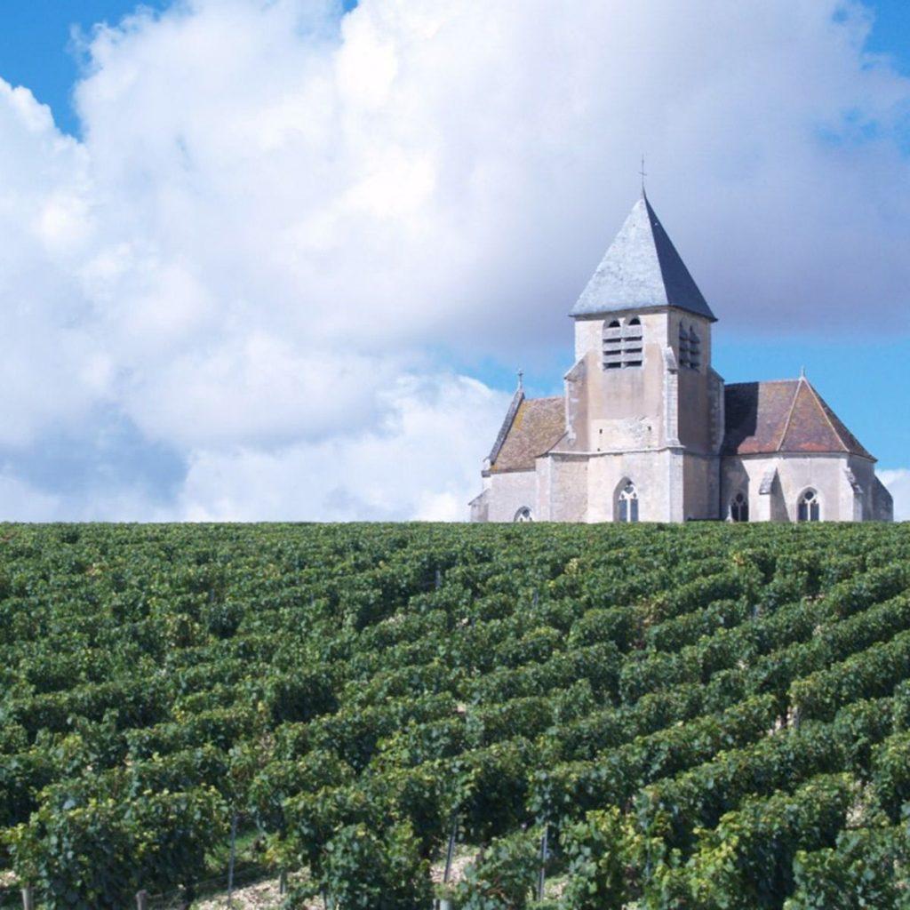 cadeau vin : Une location de pieds de vigne pour devenir vigneron
