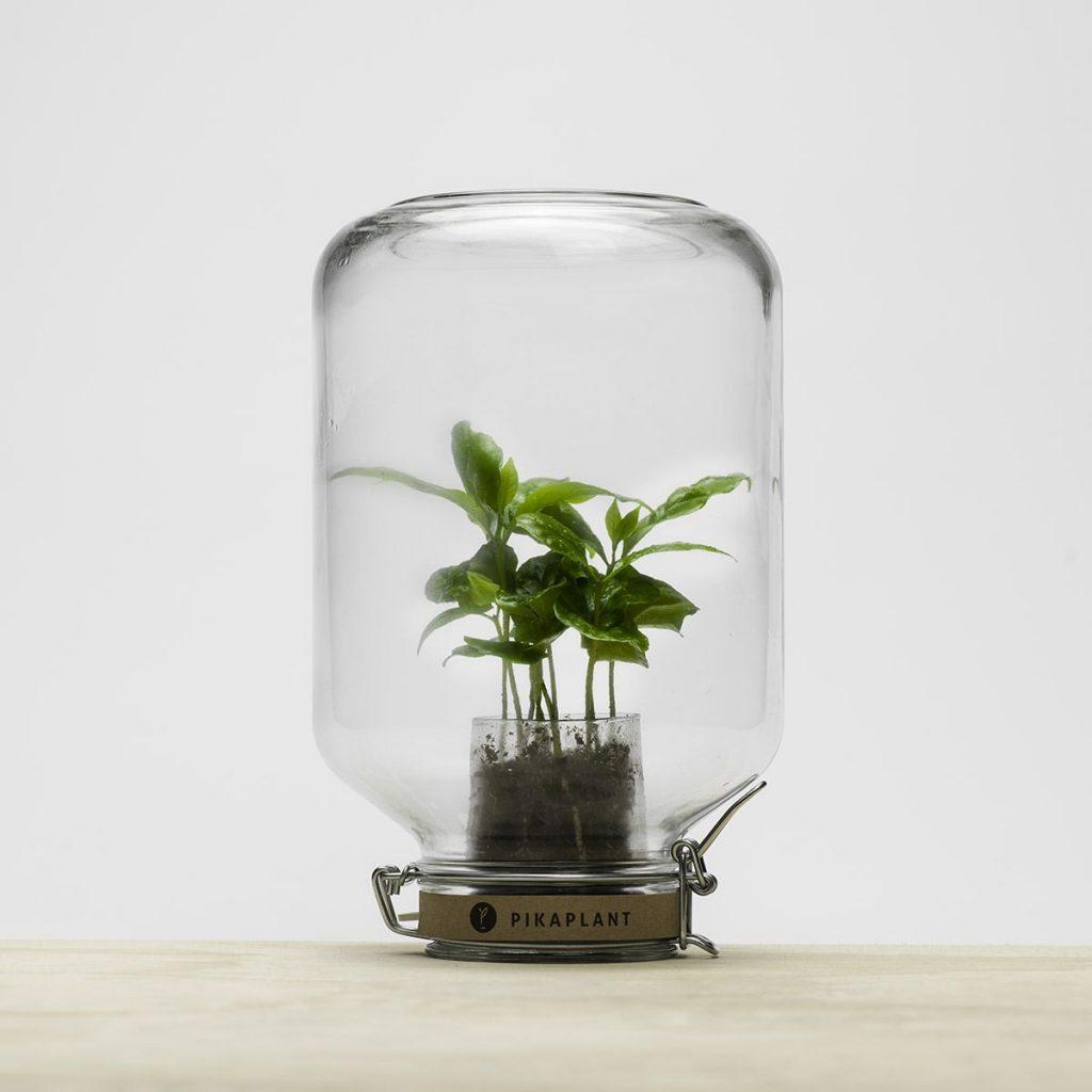 La Pika Plante : Un cadeau pour les amoureux de la nature