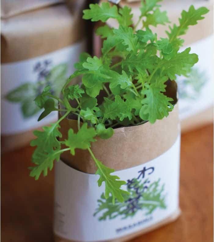 Un kit de plantes japonaises pour des saveurs d'ailleurs
