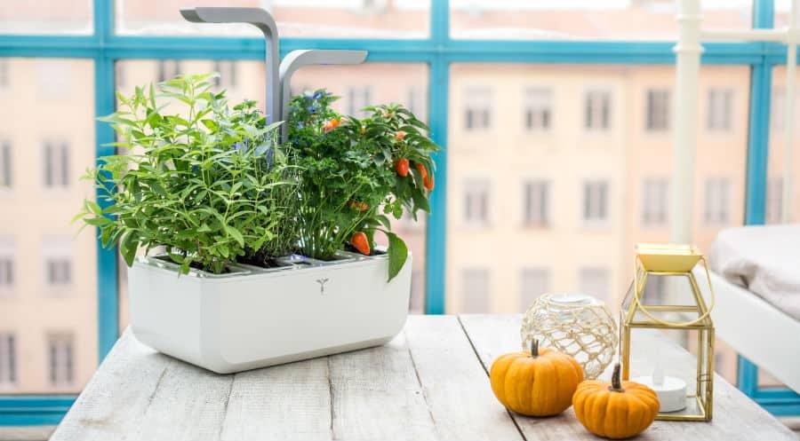 Idée cadeau pour jardiner