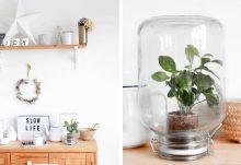 Pikaplant : la plante d'intérieur en écosystème miniature autonome
