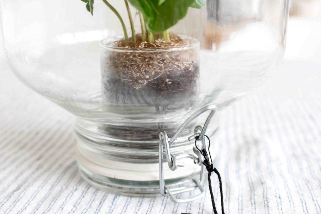 La fermeture du bocal de la Pikaplant : Plante d'interieure