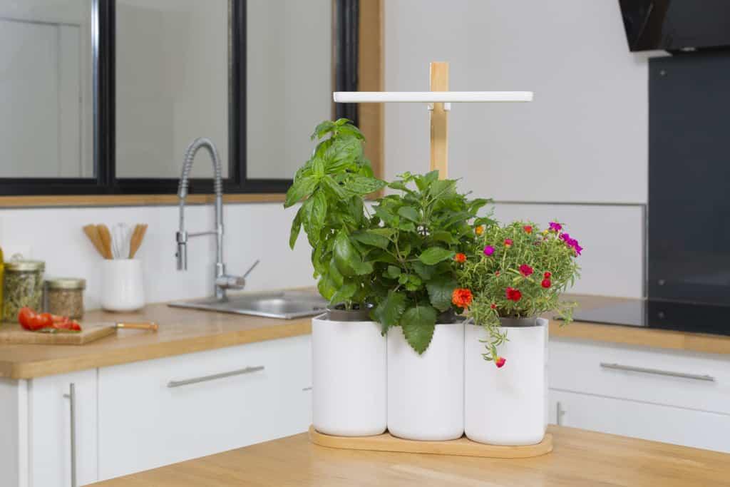 le potager d 39 int rieur lilo un mini jardin d 39 int rieur. Black Bedroom Furniture Sets. Home Design Ideas