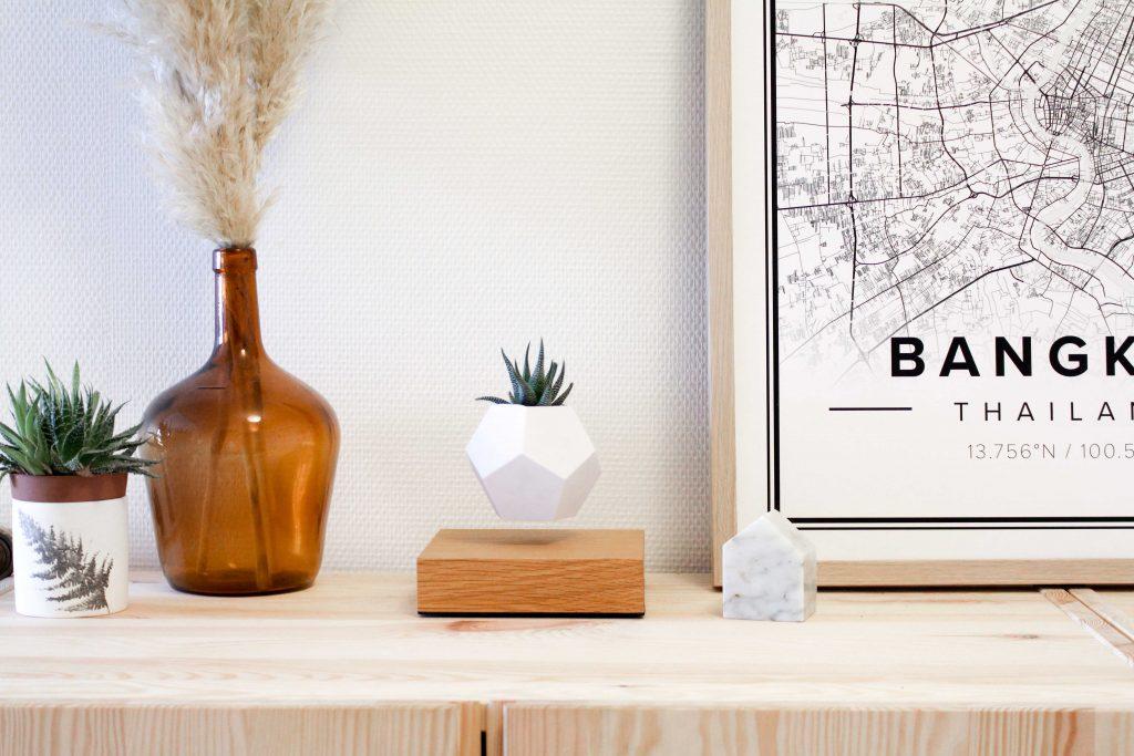 Lyfe la plante en l vitation qui fascine et enchante for Plante en levitation