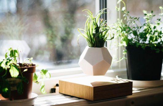 lyfe la plante en l vitation qui fascine et enchante. Black Bedroom Furniture Sets. Home Design Ideas