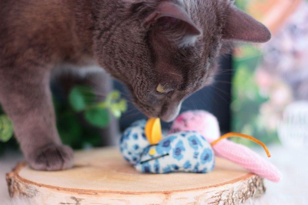 jouets-chats-duvo