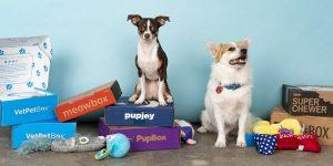 Les Box pour chiens