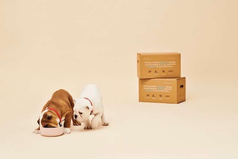 croquette chien personnalisé