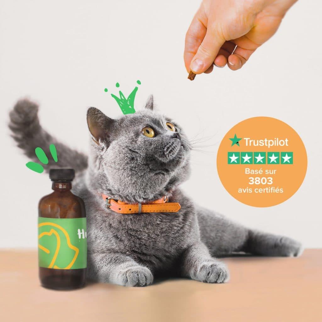 La paté pour chat Hector Kitchen