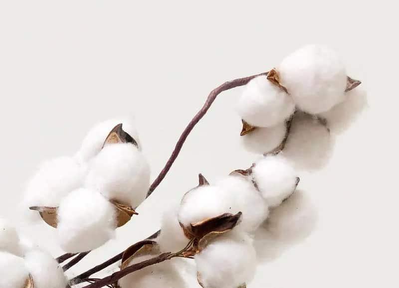 Jho propose des produits en coton