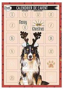 Doogy : un calendrier de l'avent pour chien tendance
